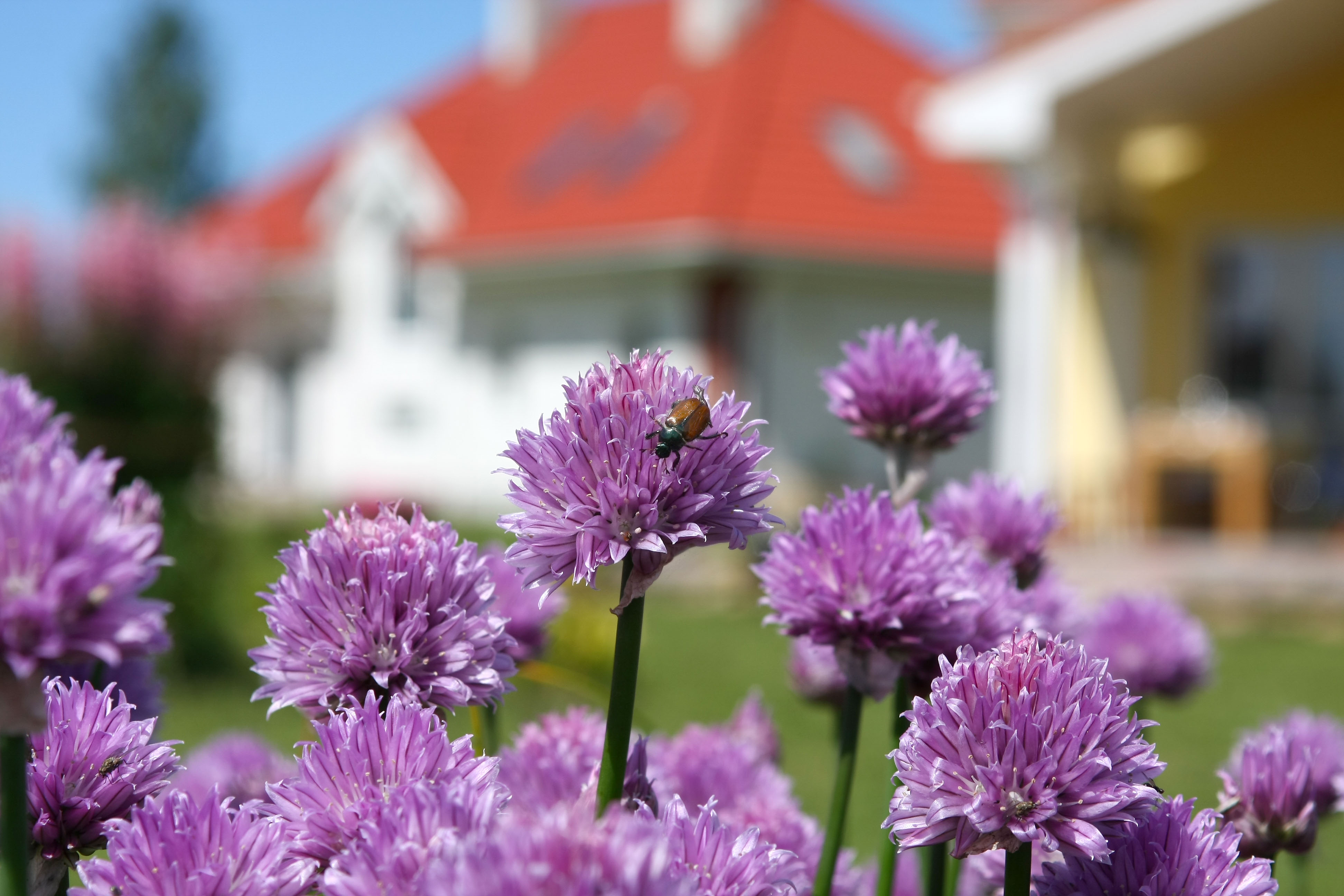 Fresh flowers add charm to your property